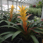 Houseplants_Bromeliad
