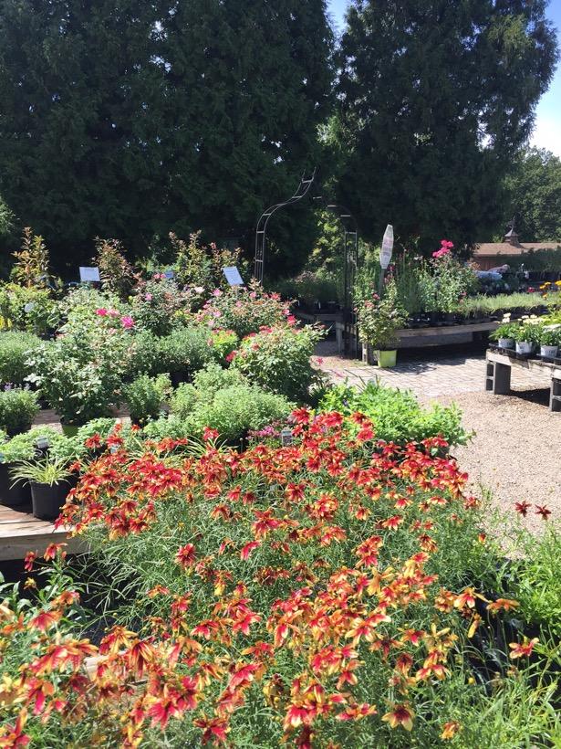 img_1185 - Mendham Garden Center